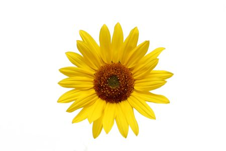 AdobeStock_31713_Sunflower
